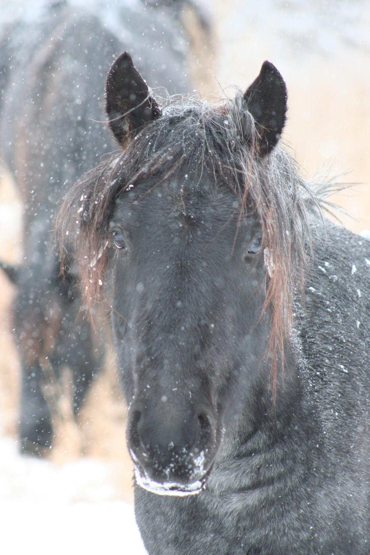 Snow (1)